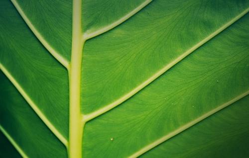 HKEX Sustainable & Green Exchange